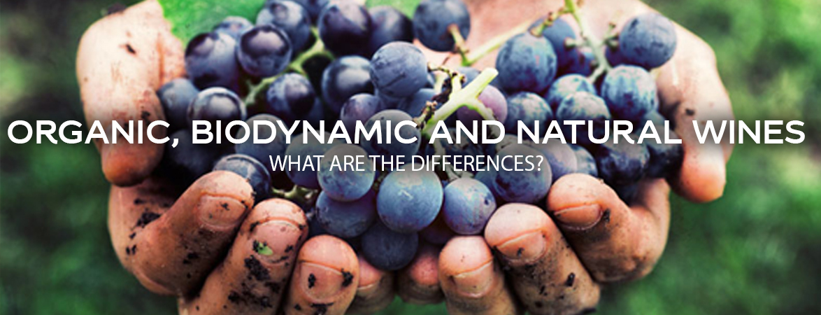 Biodynamic, organic and natural wines, what are the differences?
